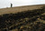A local man looks at charred grass 05 January 2004 following a fire provoked by a meteorite that fell 04 January 2004 in the vicinity of the Spanish town of Renedo de Valderaduey, near Leon.   PEDRO ARMESTRE/AFP/Getty Images