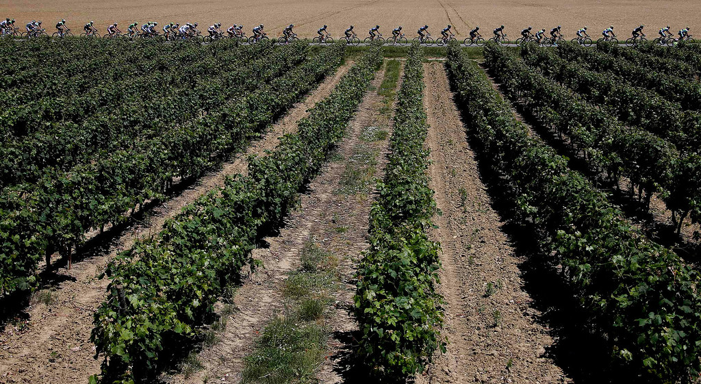 Description of . The pack of riders cycles past a vineyard during the 195 km eight stage of the centenary Tour de France cycling race from Castres to Ax 3 Domaines July 6, 2013.     REUTERS/Eric Gaillard