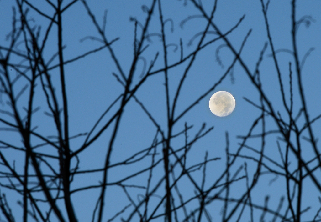 Description of . The moon goes down over a morning sky, Wednesday October 31, 2012, in Arvada. With highs forecasted in the low 70s, for today in the metro area, it will make for a warmer than normal Halloween. RJ Sangosti, The Denver Post
