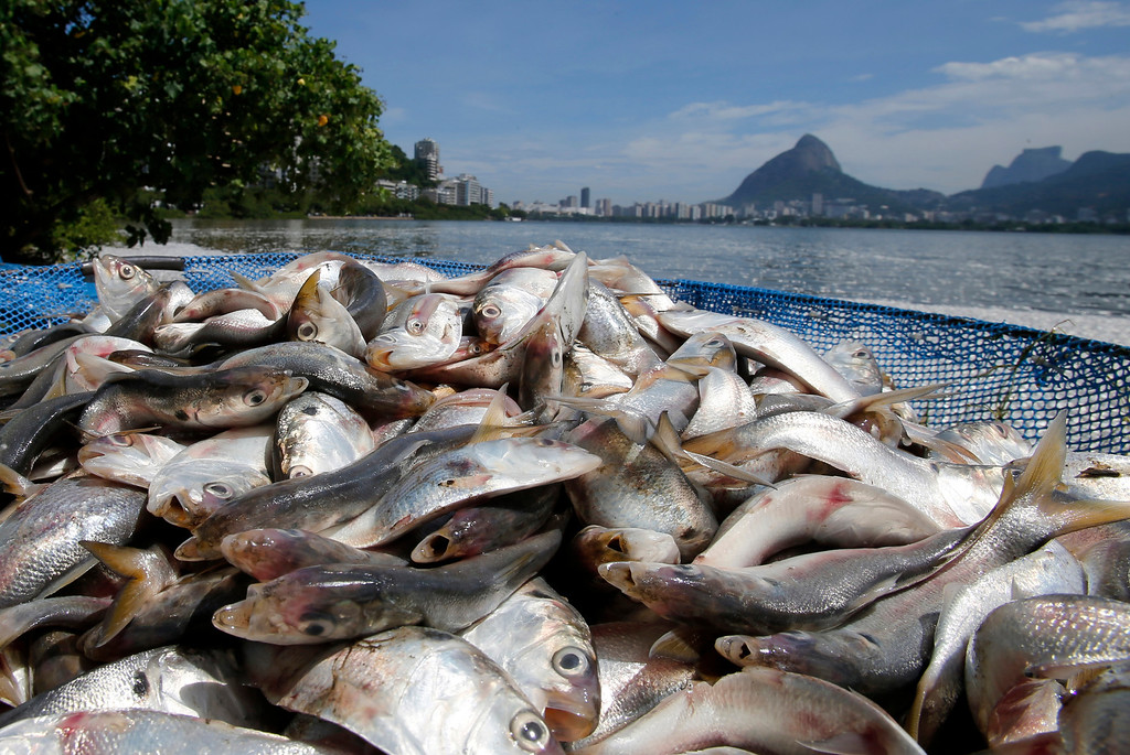 Description of . Dead fish are seen at the Rodrigo de Freitas lagoon in Rio de Janeiro, March 13, 2013. REUTERS/Sergio Moraes