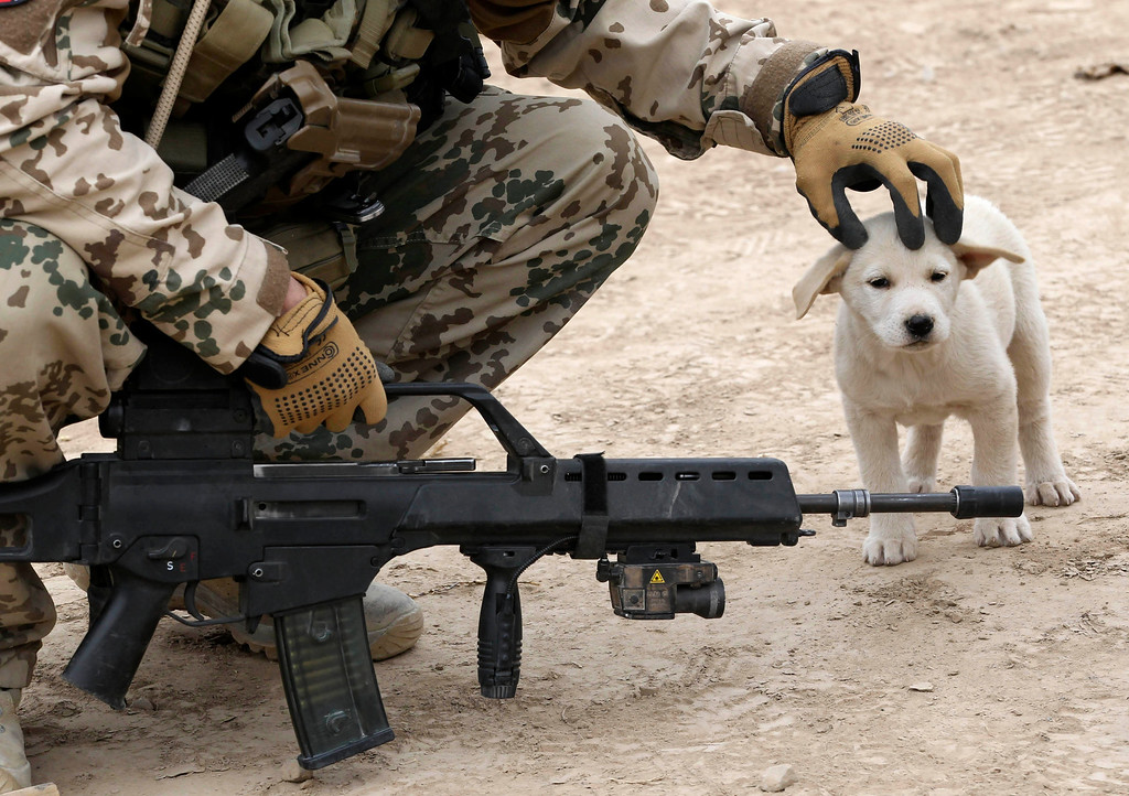 Description of . A German Bundeswehr army soldier with the Delta platoon of the 2nd paratroop company 373 strokes a dog on its head during a mission in the city of Iman Sahib, north of Kunduz, northern Afghanistan, December 6, 2010.   REUTERS/Fabrizio Bensch