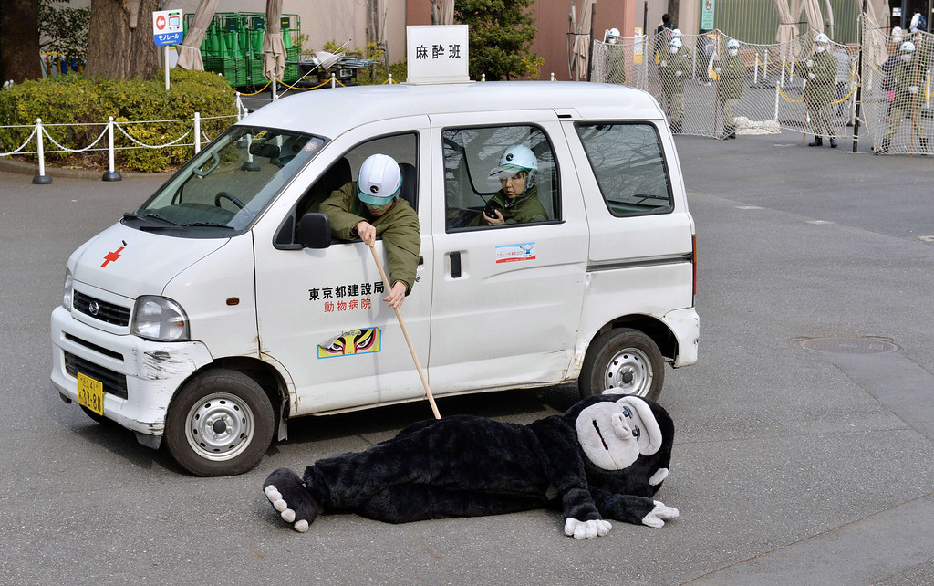 Description of . Zookeepers check a an animal keeper dressed in a gorilla costume during a drill to practice what to do in the event of an animal escape at the Ueno zoo in Tokyo on February 6, 2014. About 70 zookeepers participated in the annual drill.     AFP PHOTO / KAZUHIRO NOGI/AFP/Getty Images