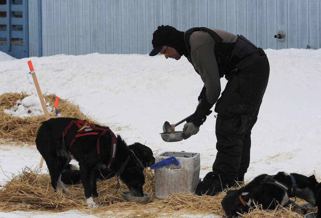 Description of . Iditarod musher Ken Anderson feeds his sled dogs in  Anvik, Alaska on Friday, March 8, 2013,  during the Iditarod Trail Sled Dog Race. (AP Photo/Anchorage Daily News, Bill Roth)