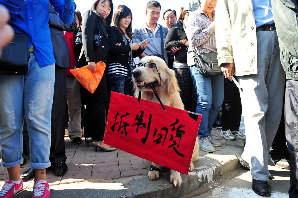 """. Visitors look at a dog with a placard with Chinese characters reading, \""""Boycott Japanese products\"""" near the September 18 Monument, on the 81st anniversary of Japan\'s invasion of China, in Shenyang, Liaoning province September 18, 2012. Japanese businesses shut hundreds of stores and plants and the country\'s embassy suspended services in China on Tuesday as anti-Japan protests reignited and risked dragging a territorial dispute between Asia\'s two biggest economies deeper into crisis. REUTERS/Stringer"""