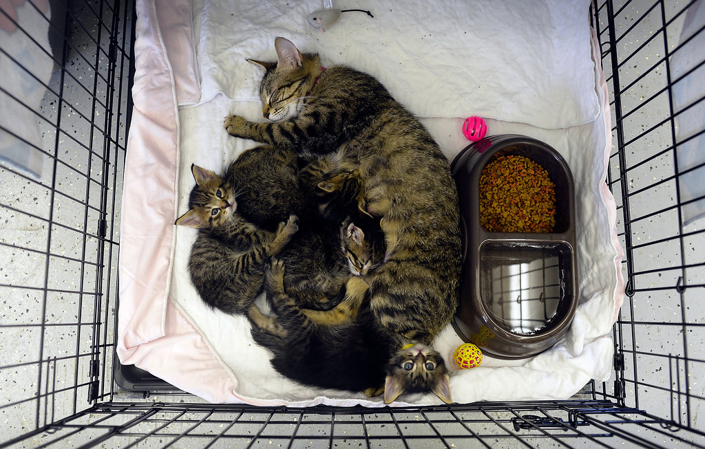 Description of . A tornado-displaced cat and her kittens rest in a cage at an animal shelter on May 23, 2013 in Moore, Oklahoma. Monday's tornado in this Oklahoma City suburb damaged or destroyed 1,200 homes and affected 33,000 people, officials said Thursday. Updating figures from one of the worst US tornados in recent years, they said the death toll from the powerful twister -- which struck with little notice in mid-afternoon -- remains at 24, with 377 injured. JEWEL SAMAD/AFP/Getty Images