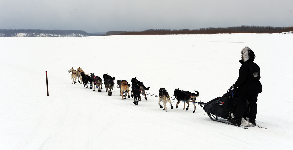 Description of . Jessie Royer drives her team up the Yukon River as she nears the Iditarod checkpoint in Anvik, Alaska on Friday, March 8, 2013,  during the Iditarod Trail Sled Dog Race. (AP Photo/Anchorage Daily News, Bill Roth)