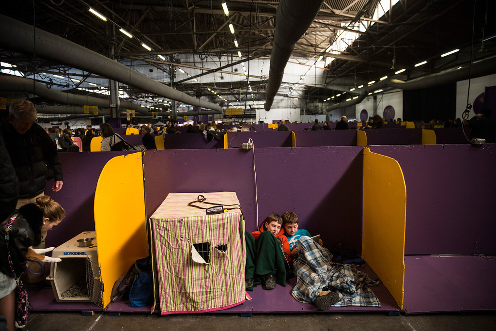 Description of . Boys play on an iPad during the 138th annual Westminster Dog Show at the Piers 92/94 on February 10, 2014 in New York City. The annual dog show showcases the best dogs from around world for the next two days in New York.  (Photo by Andrew Burton/Getty Images)