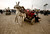 A Palestinian family falls from a donkey cart after they crossed a breach on the border wall between the Gaza Strip and Egypt January 27, 2008.  REUTERS/Suhaib Salem