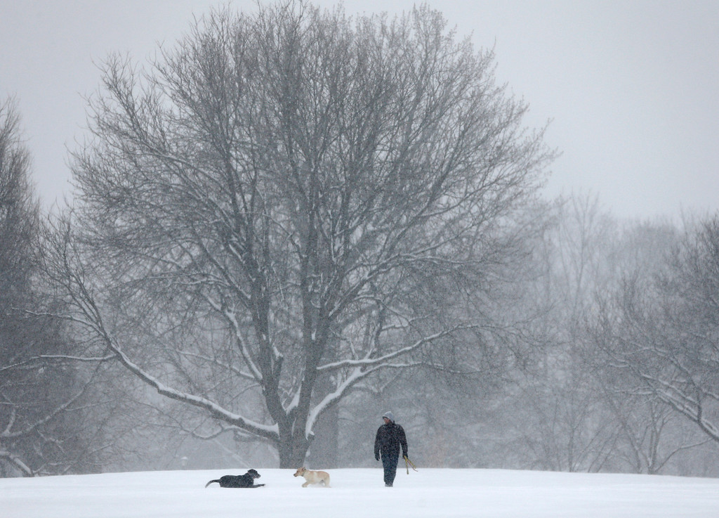 Description of . Dogs play in the snow in Washington Park on Wednesday, Feb. 5, 2014, in Albany, N.Y. Hundreds of schools across upstate New York are closed and authorities are advising against any unnecessary travel as a snowstorm moves across the region. (AP Photo/Mike Groll)