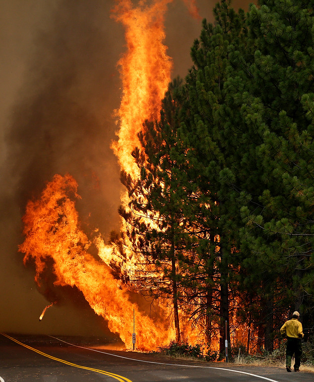 Description of . The Rim Fire burns along Highway 120 near Yosemite National Park, Calif., on Sunday, Aug. 25, 2013. With winds gusting and flames jumping from treetop to treetop, hundreds of firefighters have been deployed to protect communities in the path of the Rim Fire raging north of Yosemite National Park. (AP Photo/Jae C. Hong)