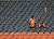 Broncos fans sit dejected in the stands after they lost to the Ravens in overtime. The Denver Broncos vs Baltimore Ravens AFC Divisional playoff game at Sports Authority Field Saturday January 12, 2013. (Photo by Joe Amon,/The Denver Post)