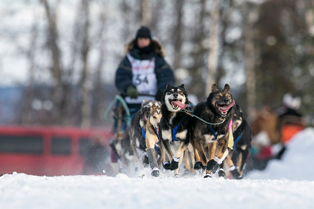 Description of . Jessica Hendricks' team races down the trail at the re-start of the Iditarod dog sled race in Willow, Alaska March 3, 2013. From Willow, the race runs for almost 1000 miles as it crosses the state. REUTERS/Nathaniel Wilder