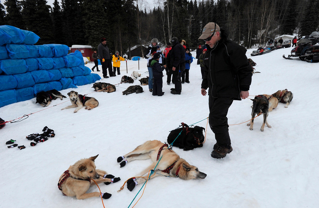 Description of . Four-time Iditarod champion Jeff King takes care of his dogs after arriving in Anvik, Alaska, on Friday, March 8, 2013, during the Iditarod Trail Sled Dog Race. (AP Photo/Anchorage Daily News, Bill Roth)