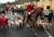 Stuart Radbourne, huntsman and joint-master with the Avon Vale Hunt, leads the riders and hounds for their traditional Boxing Day hunt, on December 26, 2012 in Lacock, England. As hundreds of hunts met today, Environment Secretary Owen Paterson claimed that moves to repeal the ban on hunting with dogs in England and Wales may not happen in 2013, although he insisted it was still the government's intention to give MPs a free vote on lifting the ban.  (Photo by Matt Cardy/Getty Images)  *** BESTPIX ***