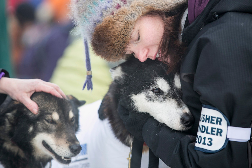 Description of . A musher handler for Ed Stielstra's team hugs one of the dogs before lining up for the ceremonial start to the Iditarod dog sled race in downtown Anchorage, Alaska March 2, 2013.  REUTERS/Nathaniel Wilder