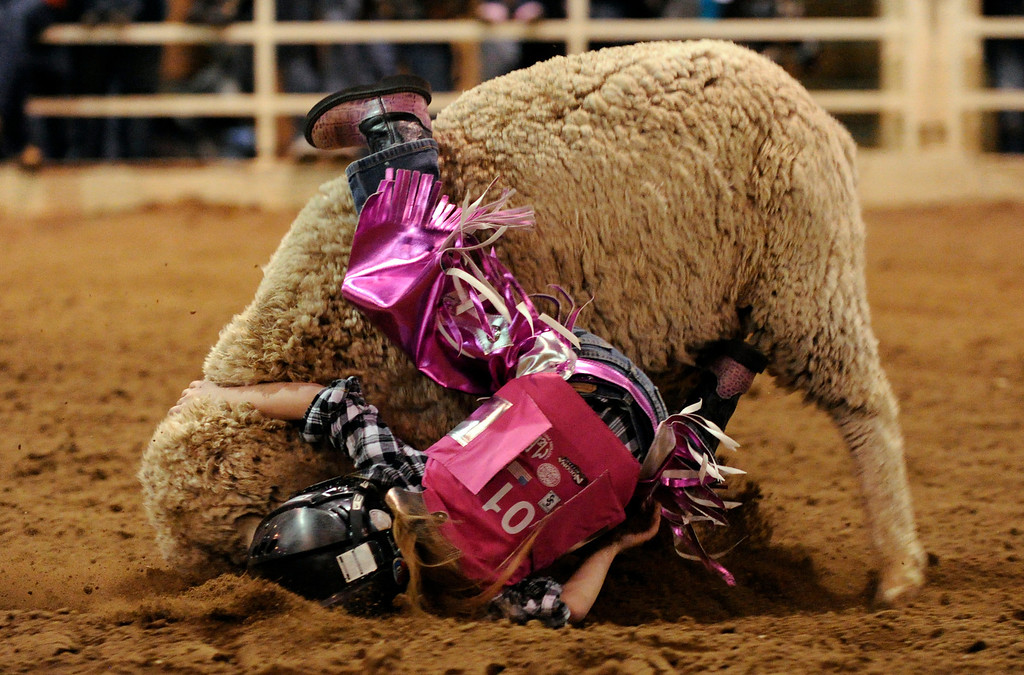 Description of . Krystal Dill, 5, is in action during the mutton busting at National Western Stock Show in Denver, Colorado, Wednesday, January 11, 2012. Hyoung Chang, The Denver Post