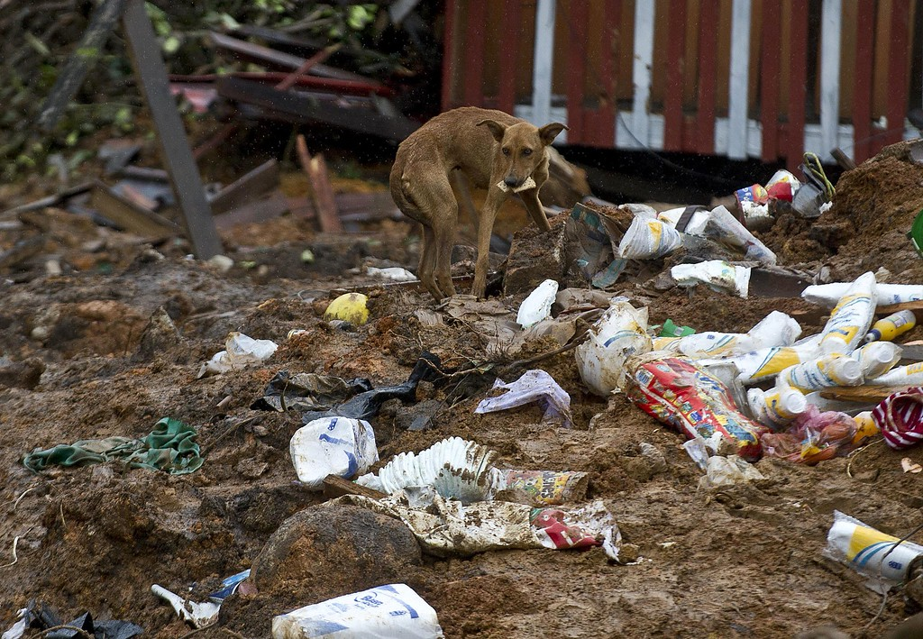 Description of . A stray dog rummages for food among debris in La Pintada, state of Guerrero, Mexico, on September 19, 2013 as heavy rains hit the country.  AFP PHOTO/RONALDO  Schemidt/AFP/Getty Images