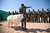 A sheep passes Senegalese troops standing in formation for the arrival of African Union United Nations mission in Darfur (UNAMID) Force Commander  Lieutenant General Patrick Nyamvumba of Rwanda at the Umm Baru team site February 22, 2012. REUTERS/UNAMID/Albert Gonzalez Farran/Handout