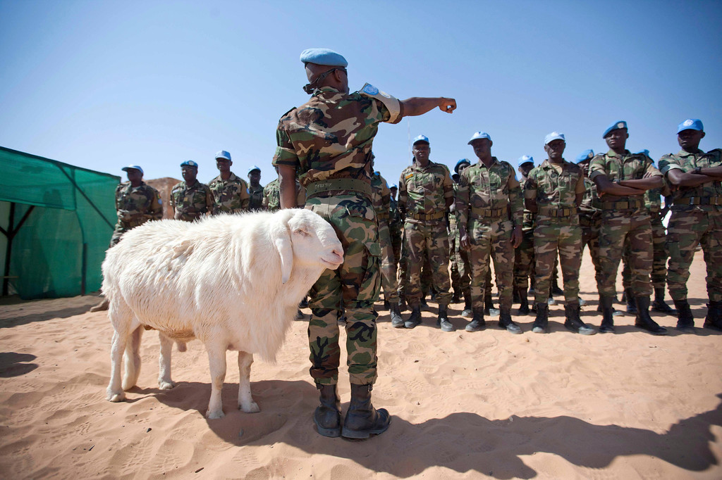 Description of . A sheep passes Senegalese troops standing in formation for the arrival of African Union United Nations mission in Darfur (UNAMID) Force Commander  Lieutenant General Patrick Nyamvumba of Rwanda at the Umm Baru team site February 22, 2012. REUTERS/UNAMID/Albert Gonzalez Farran/Handout