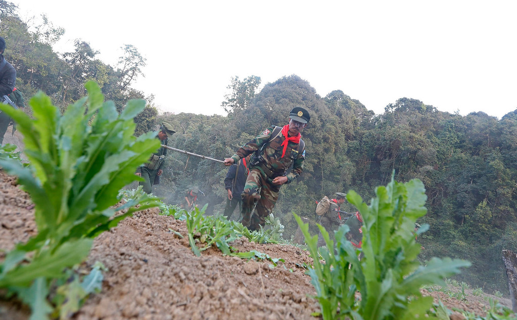 Description of . Soldiers of the Ta-ang National Liberation Army (TNLA), one of the ethnic rebel groups, destroying a poppy field in Loi Mel Main village, Man Tone Township, Northern Shan State, Myanmar on Jan. 16, 2014. EPA/NYEIN CHAN NAING