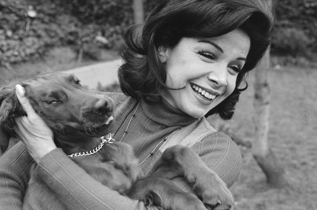 Description of . Former Mouseketeer Annette Funicello gets an enthusiastic greeting from Skippy, her Irish setter puppy, at home in Encino, Calif., March 13, 1978.  (AP Photo/George Brich)