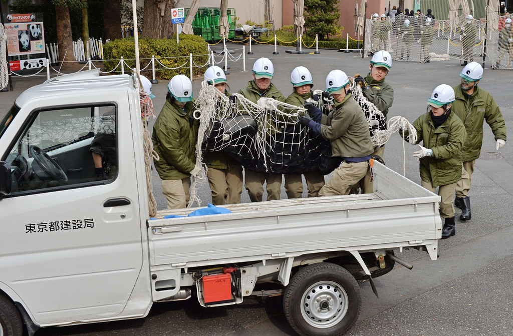 Description of . Zookeepers carry an animal keeper dressed in a gorilla costume during a drill to practice what to do in the event of an animal escape at the Ueno zoo in Tokyo on February 6, 2014. About 70 zookeepers participated in the annual drill.     AFP PHOTO / KAZUHIRO NOGI/AFP/Getty Images