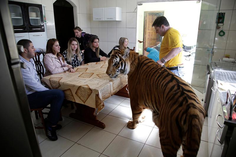 tiger-family-brazil-001.JPG