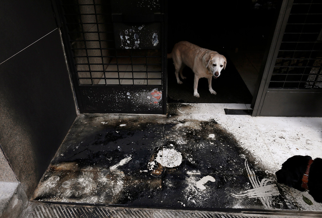 Description of . Dogs stand at the burnt entrance of a building following a series of arson attacks against journalists in Athens January 11, 2013.  REUTERS/John Kolesidis