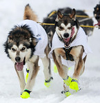 Photos: 2013 Iditarod - A grueling 1,000-mile trek through Alaskan wilderness - - York Daily Record