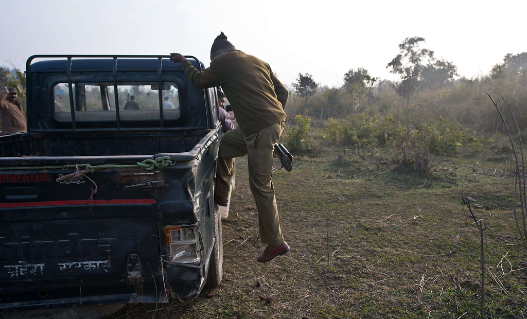 Description of . An Indian forest guard gets down from a vehicle during a patrol in the forest near the village of Barahpur in Bijnor District some 120kms north-east of New Delhi on February 2, 2014.  Since December 29, 2013, the same tiger is believed to have killed eight people living near the national park which covers 521 square kilometers in the northern states of Uttar Pradesh and Uttarakhand.  PRAKASH SINGH/AFP/Getty Images