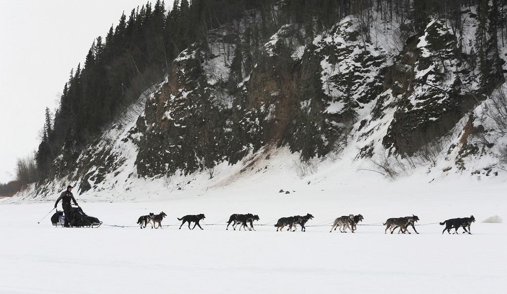 Description of . Musher Ken Anderson drives his team up the Yukon River as he nears the Iditarod checkpoint in  Anvik, Alaska on Friday, March 8, 2013,  during the Iditarod Trail Sled Dog Race. (AP Photo/Anchorage Daily News, Bill Roth)