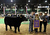 DENVER, CO- JANUARY 24:    Junior Market beef grand champion winner Shilo Schaake, 15, of West Morlin, Kansas, stands with his crossbred steer Trevor and rodeo queens as they get photographed after the event inside the Stadium Arena.  The Junior market beef grand champion and reserve grand champion were chosen in the Stadium Arena at the National Western Stock Show on January 24th, 2013.  The two large mixed breed steer will be auctioned off January 25th.  (Photo By Helen H. Richardson/ The Denver Post)