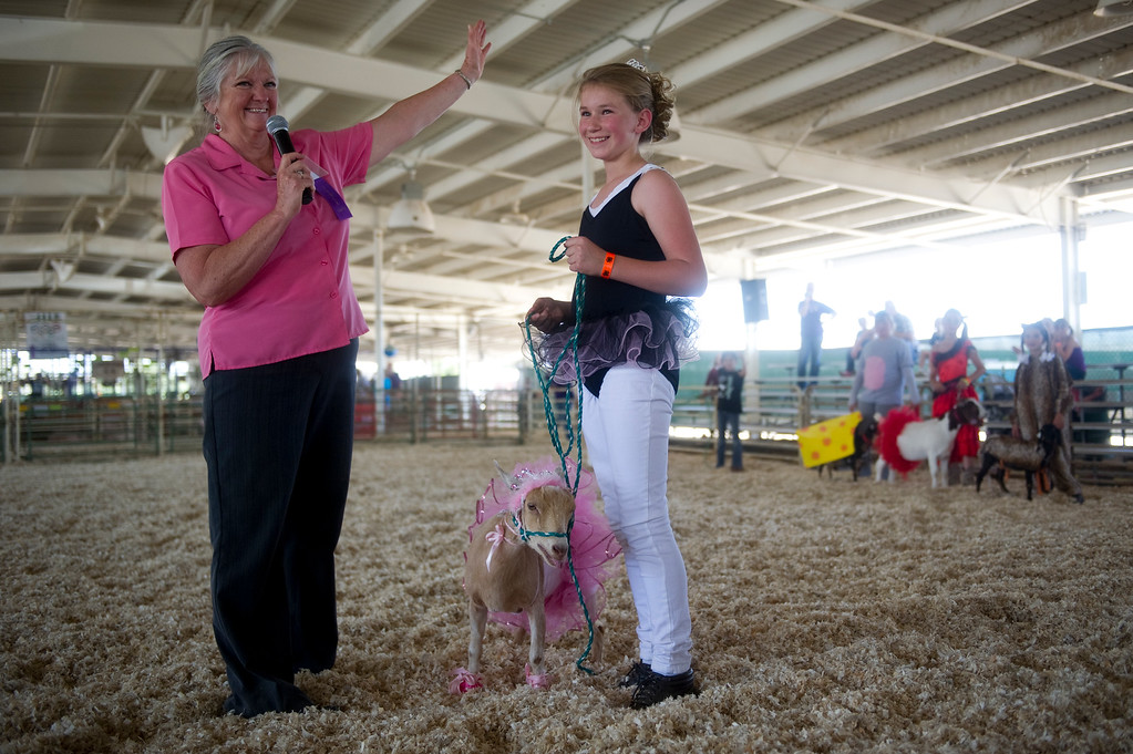 . Jenna Hellmann, 10, wins a blue ribbon with her Nigerian Dwarf goat named Pumpkin Pie in the Fun Time Goat Dress Up competition at the Adam\'s County Fair in Brighton, CO on July 31, 2013. (Photo By Grant Hindsley/The Denver Post)