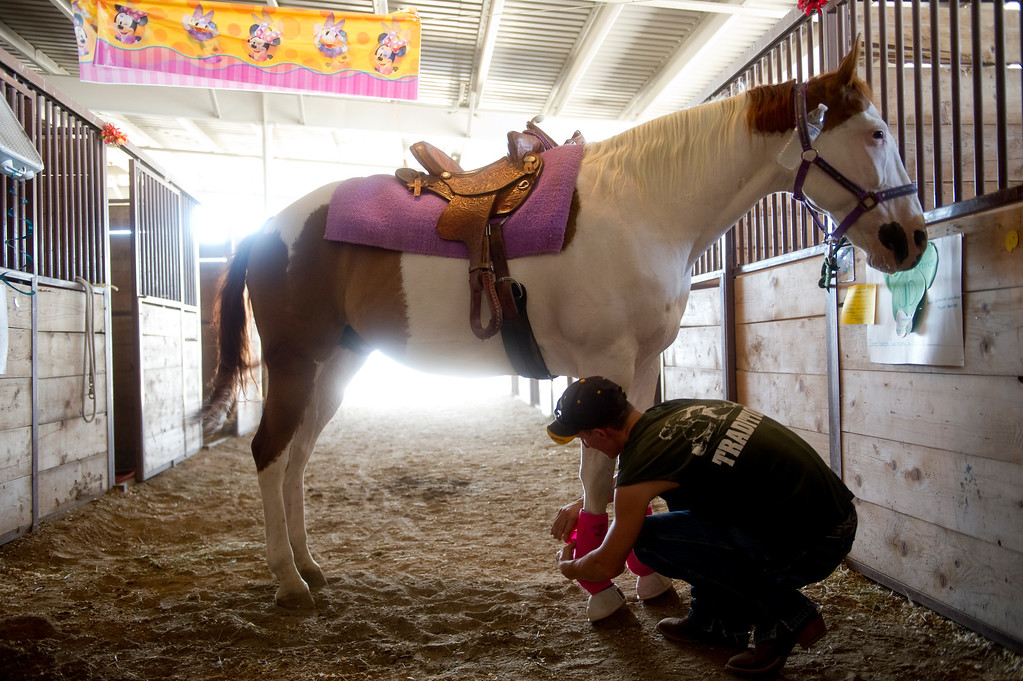 . Austin Grandstaff puts sleeves on his friend\'s barrel racing horse, JD, to protect the front achilles heels from getting hit by the back hooves during a race, at the Adam\'s County Fair in Brighton, CO on July 31, 2013. (Photo By Grant Hindsley/The Denver Post)