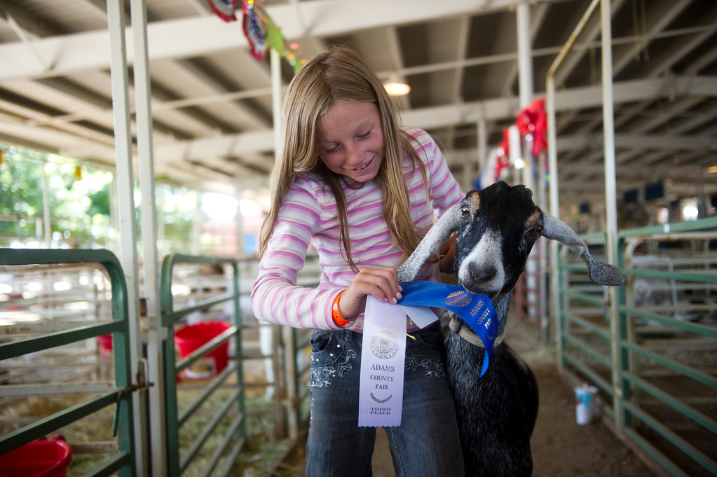 . Kristin Marr\'s, 9, goat grabs her first place ribbon for goats two to three years old, while posing for a portrait at the Adam\'s County Fair in Brighton, CO on July 31, 2013. (Photo By Grant Hindsley/The Denver Post)