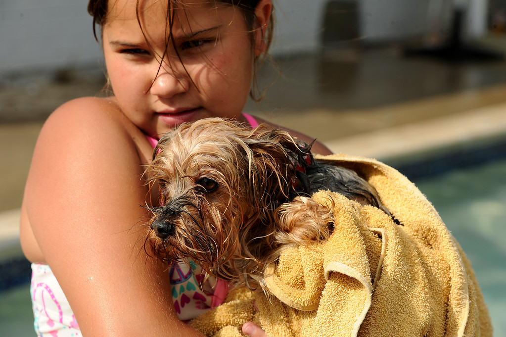 . Paige Johnson , 8, of Northglenn, warms her one year old Yorkshire Terrier JJ up in a towel after swimming in the pool at the Kiwanis Pool in Northglenn, CO on September 2, 2013.  Lucky dogs were invited to swim at Kiwanis Pool in Northglenn, CO on Monday September 2, 2013 before the pool is drained for the summer.  In addition to swimming, dogs enjoyed games, contests, treats and running around off leash with other dogs.  The price of entry was $5 which benefits the pool.  This is the first year Northglenn has offered the pool to the dogs.  Photo by Helen H. Richardson/The Denver Post