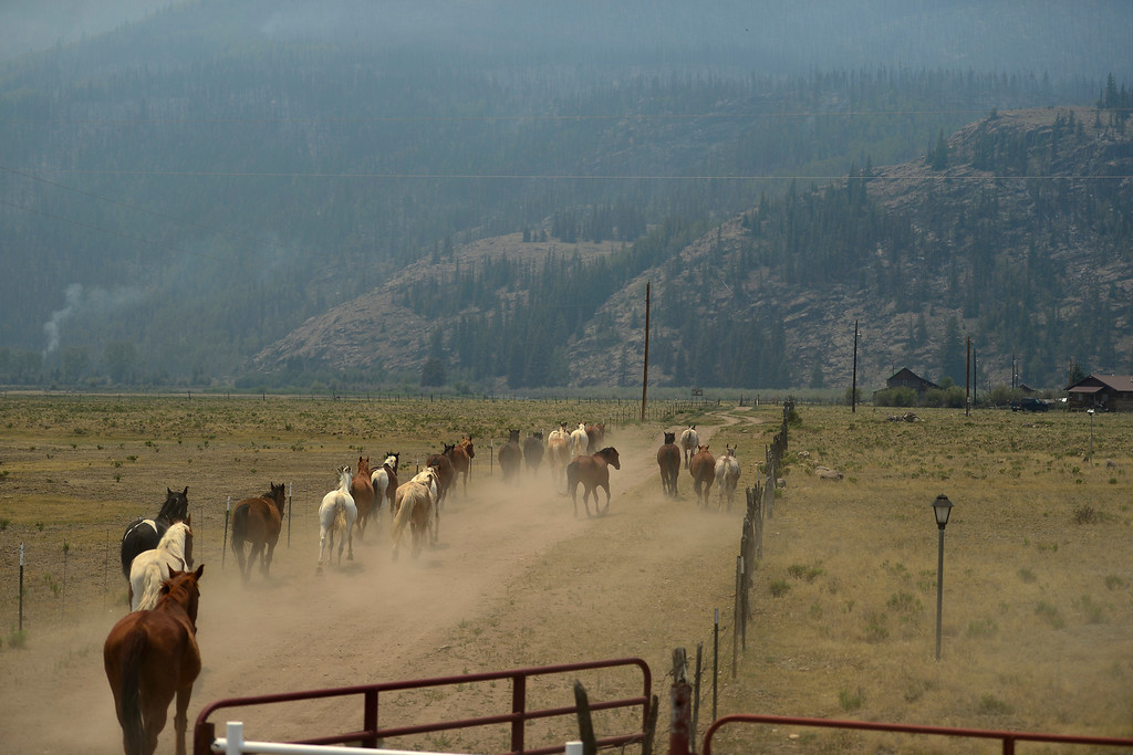 . More than 20 horses from Freemon\'s Ranch are returned to their meadow as the adjacent mountainside smolders after being burned by the Papoose fire. The trio of fires making up the West Fork Complex fire have now consumed more than 80,000 acres. (Photo by AAron Ontiveroz/The Denver Post)