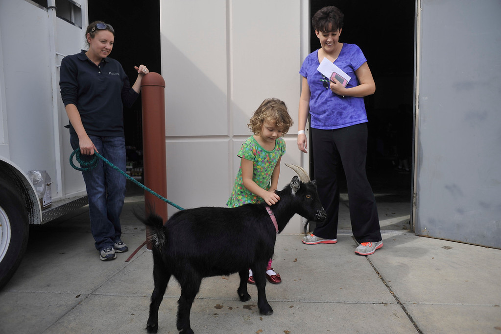 . ARVADA, CO. - SEPTEMBER 13: Rubi Connell, 5, pets Gloria the goat as her mother Barb Connell of Thornton (Right) and Autumn Braun of Elizabeth look on. HindmanSanchez Law Firm\'s annual Community Can-Can food donation drive and sculpture contest took place in Arvada Friday afternoon, September 13, 2013. (Photo by Patrick Traylor/The Denver Post)