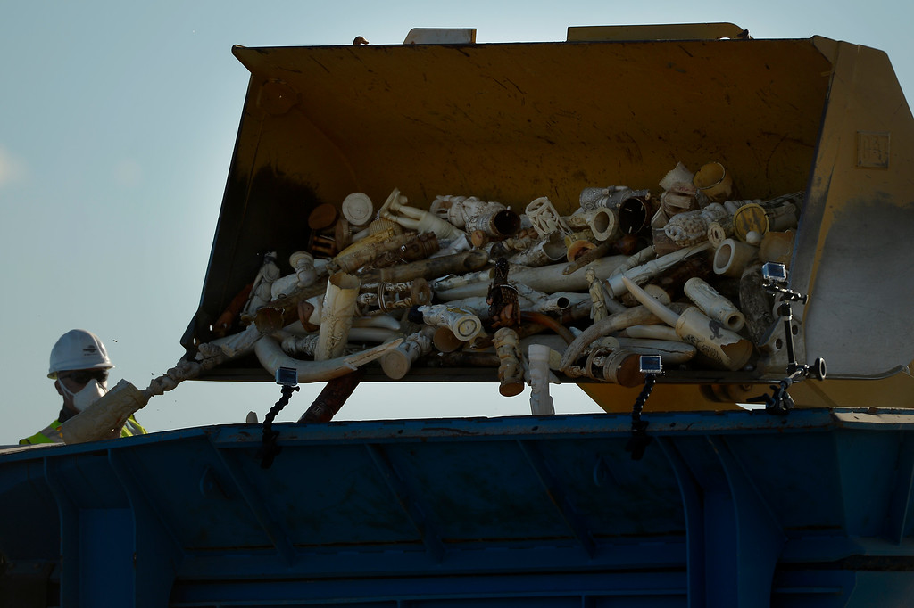 . US Fish and Wildlife, at the direction of President Obama, crushed tons of ivory at the Rocky Mountain Arsenal Wildlife Refuge in effort to stymie the illegal taking of wildlife November 14, 2013 Commerce City, CO. (Photo By Joe Amon/The Denver Post)