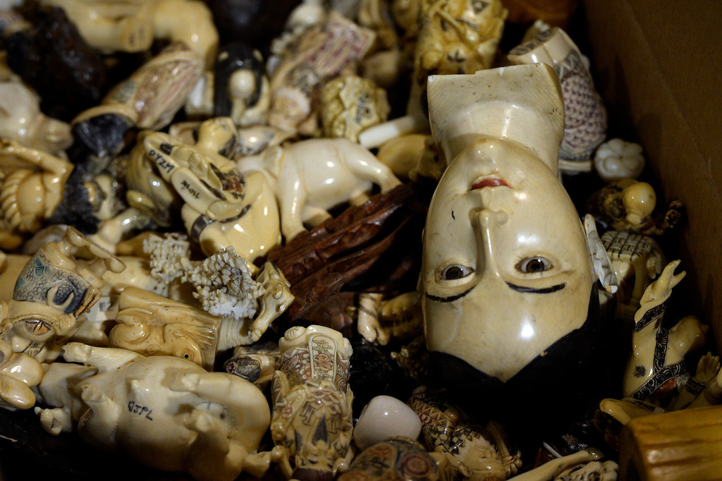 . COMMERCE CITY, CO. - September 09: Ivory figurines, raw, polished and carved tusks will be part of an estimated 6 tons of confiscated ivory that will be crushed in November by the U.S. Fish & Wildlife Service at the The Rocky Mountain Arsenal National Wildlife Refuge as a first global push by the United States to stop the illegal ivory trade. September 09, 2013 Commerce City, Colorado. (Photo By Joe Amon/The Denver Post)