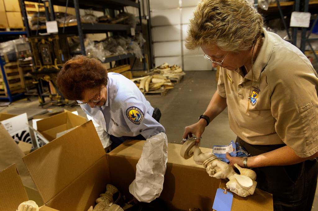 . COMMERCE CITY, CO. - September 09: Volunteer Diane Buell and Wildlife Repository specialist Doni Sprague (far right) dismantle ivory figurines that will be part of an estimated 6 tons of confiscated ivory that will be crushed in November by the U.S. Fish & Wildlife Service at the The Rocky Mountain Arsenal National Wildlife Refuge as a first global push by the United States to stop the illegal ivory trade. September 09, 2013 Commerce City, Colorado. (Photo By Joe Amon/The Denver Post)