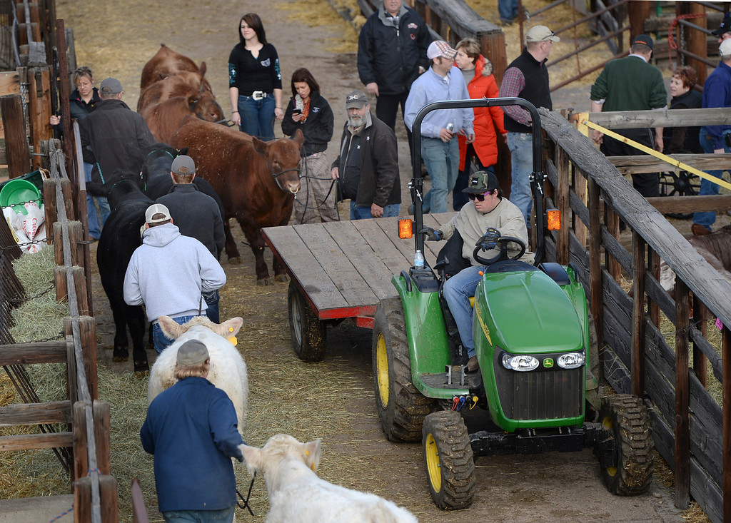. DENVER, CO. - JANUARY 15: A traffic-jam of ranch hands animals and vehicles clogged an alley inside the stockyards at the National Western Stock Show Wednesday afternoon, January 15, 2014. The stock show runs through January 26. Photo By Karl Gehring/The Denver Post