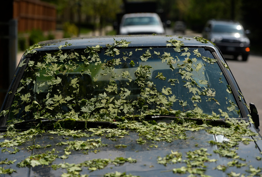 . DENVER, CO. - MAY 21:  Green leaves coated a truck along Harvard Ave and Fillmore St. in southeast Denver Wednesday afternoon, May 21, 2014 after a strong hail storm the day before. (Photo By Andy Cross / The Denver Post)