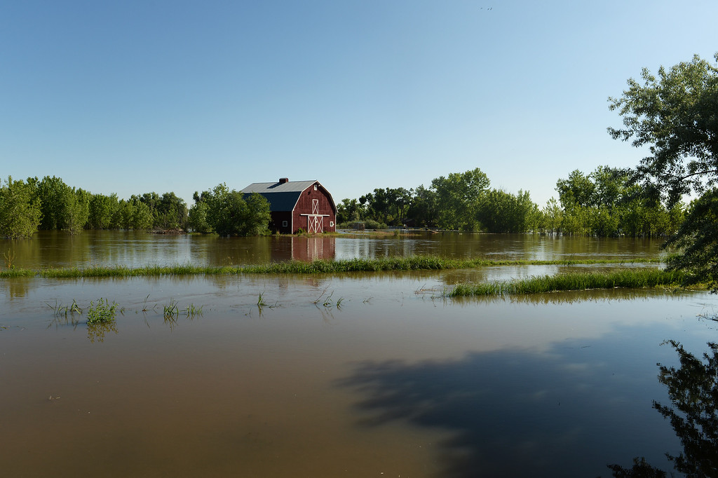 . A bard is surrounded in flood water near the Poudre River in northwest Greeley, June 2, 2014. A flood warning for the Poudre River near Greeley has been extended through Sunday. (Photo by RJ Sangosti/The Denver Post)