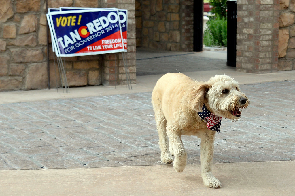 . Tom Tancredo\'s dog Sasha wears a patriotic bandana near a set of campaign signs during his Republican gubernatorial primary watch party. Tom Tancredo watch party on Tuesday, June 24, 2014. (Photo by AAron Ontiveroz/The Denver Post)