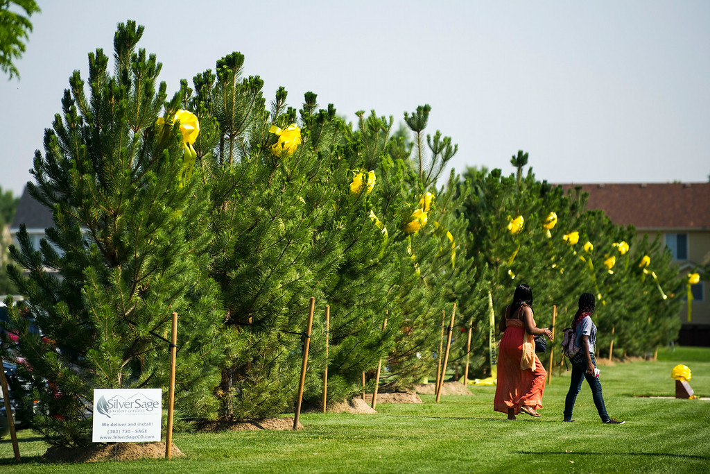 . Thirteen trees that make up Hope Park are seen after a dedication ceremony at The Potter\'s House of Denver on Sunday, July 20, 2014 in Aurora, CO.  Each tree planted bore a yellow ribbon with the name of a person who lost their life in the tragedy.  (Photo by Kent Nishimura/The Denver Post)