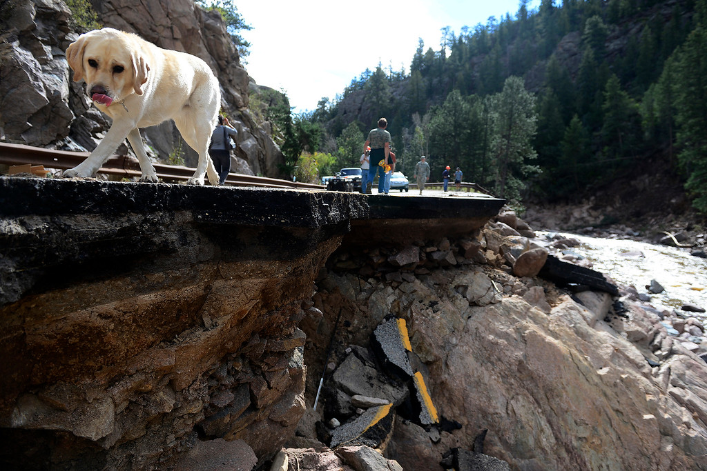 . PINEWOOD SPRINGS, CO - SEPTEMBER 22: CDOT executive director Don Hunt\'s dog, Sasha, walks near a ledge of broken road during a tour to look at the damage caused by recent flooding in the area on U.S. Highway 36 between Lyons and Pinewood Springs. Pavement is missing in many section of the road that connects Lyons to Estes Park. (Photo by AAron Ontiveroz/The Denver Post)