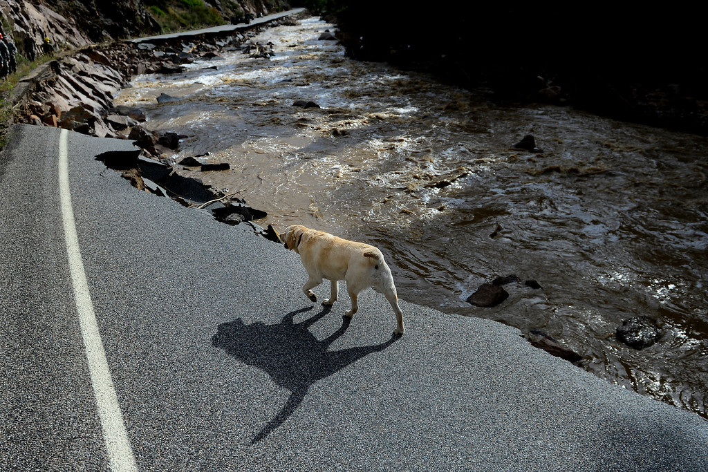 . CDOT executive director Don Hunt\'s dog, Sasha, walks near a ledge of broken road during a tour to look at the damage caused by recent flooding in the area on U.S. Highway 36 between Lyons and Pinewood Springs. Pavement is missing in many section of the road that connects Lyons to Estes Park. (Photo by AAron Ontiveroz/The Denver Post)