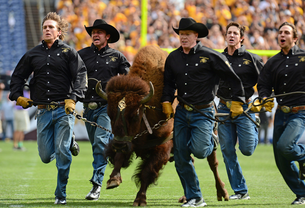 . Ralphie the University of Colorado mascot comes thundering onto the field before the Rocky Mountain Showdown at Sports Authority Field at Mile High on Sunday, September 1, 2013. This is the 85th meeting of the two teams.  Photo by Helen H. Richardson/The Denver Post