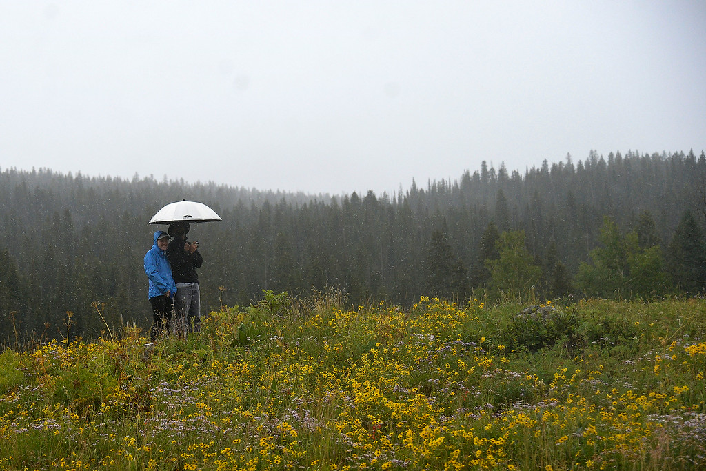 . Fans stand in a field of wildflowers as the rain begins to fall shortly before a weather delayed stage 2. The USA Pro Challenge stage 2 on Tuesday, August 19, 2014. (Photo by AAron Ontiveroz/The Denver Post)